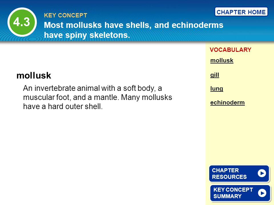 4.3 Most mollusks have shells, and echinoderms have spiny skeletons. mollusk. mollusk. gill.