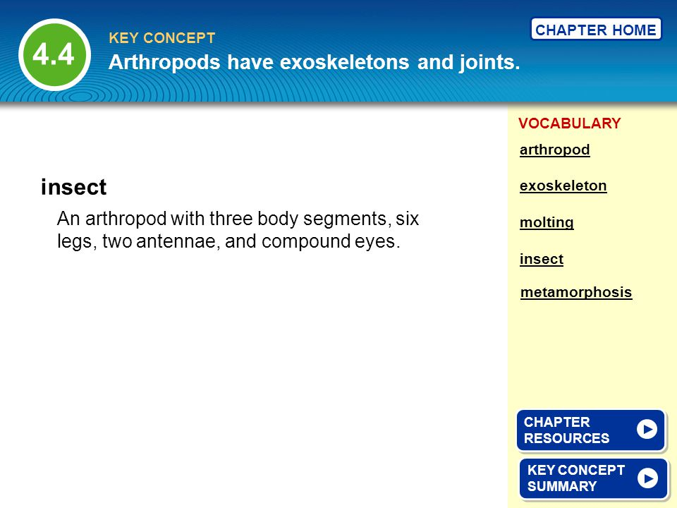 4.4 insect Arthropods have exoskeletons and joints.