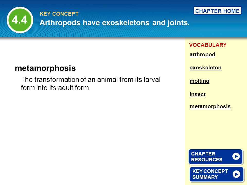 4.4 metamorphosis Arthropods have exoskeletons and joints.