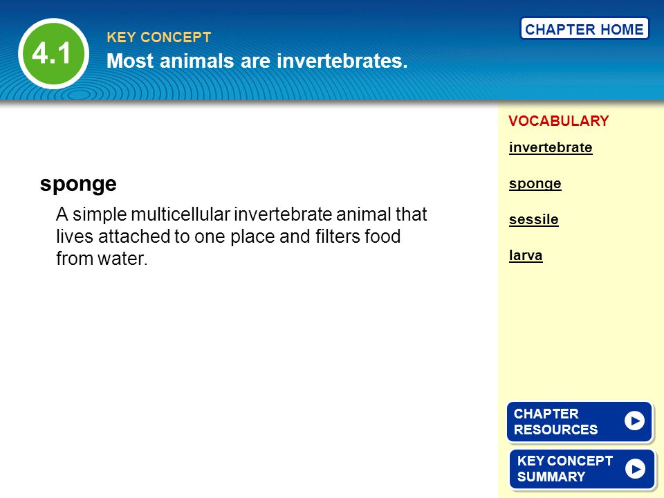 4.1 sponge Most animals are invertebrates.