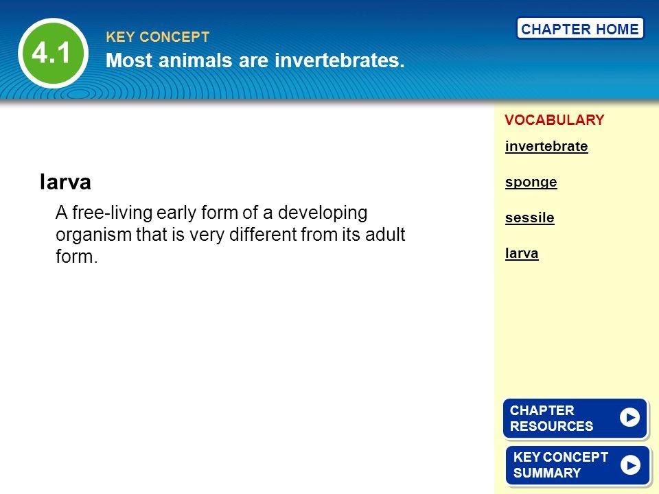 4.1 larva Most animals are invertebrates.