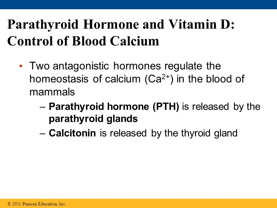 Parathyroid Hormone and Vitamin D: Control of Blood Calcium
