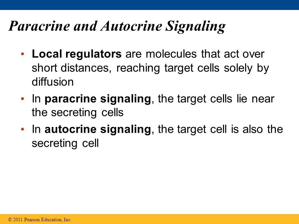 Paracrine and Autocrine Signaling
