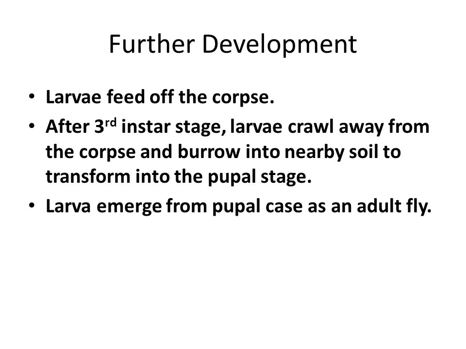 Further Development Larvae feed off the corpse.