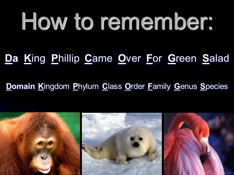 How to remember: Da King Phillip Came Over For Green Salad