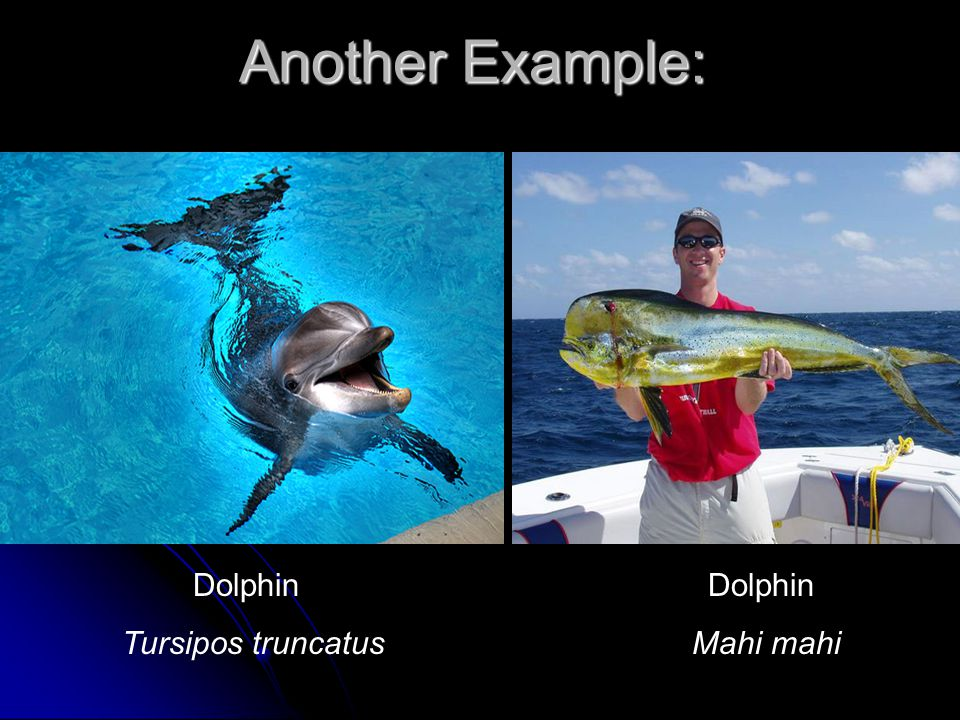 Another Example: Dolphin Dolphin.