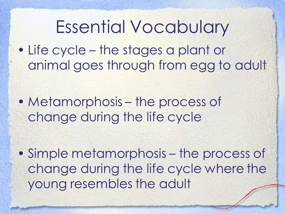 Essential Vocabulary Life cycle – the stages a plant or animal goes through from egg to adult.