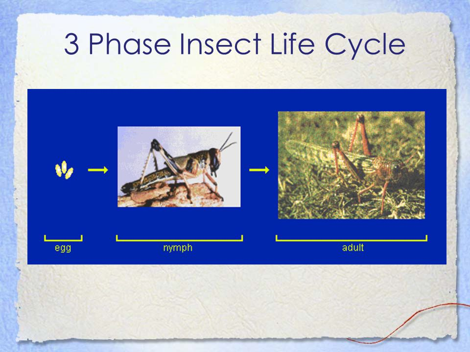 3 Phase Insect Life Cycle