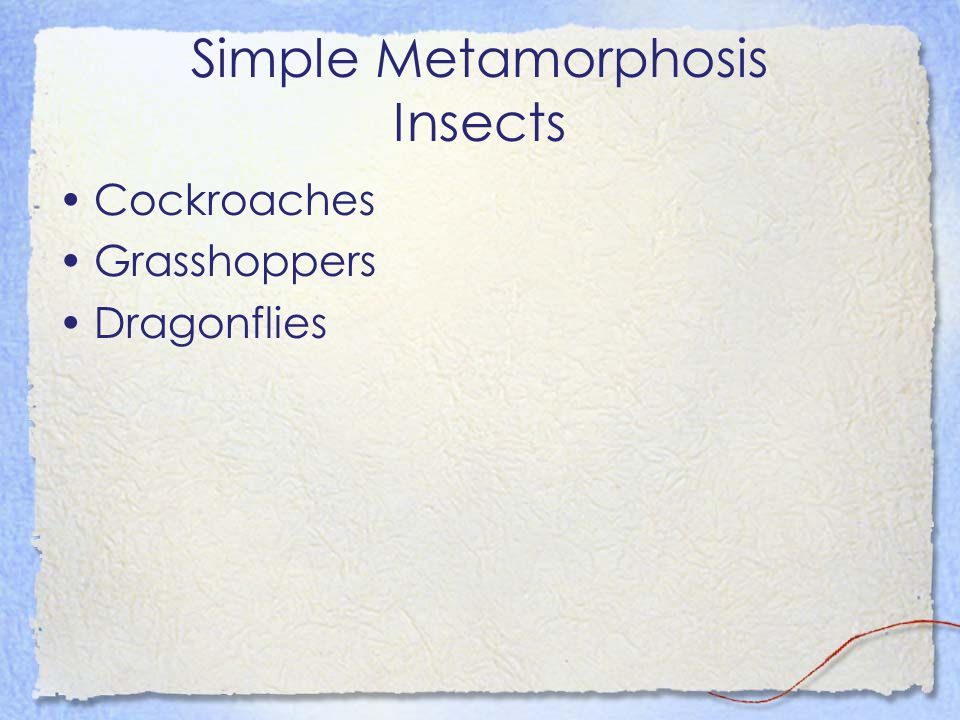 Simple Metamorphosis Insects