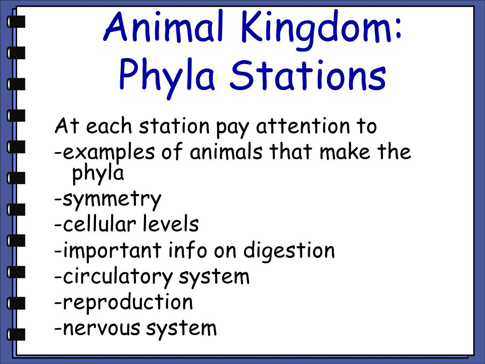 Animal Kingdom: Phyla Stations