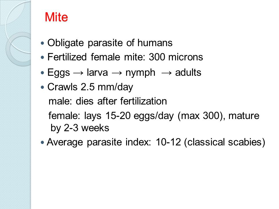 Mite Obligate parasite of humans Fertilized female mite: 300 microns