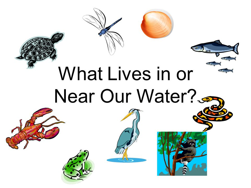 What Lives in or Near Our Water
