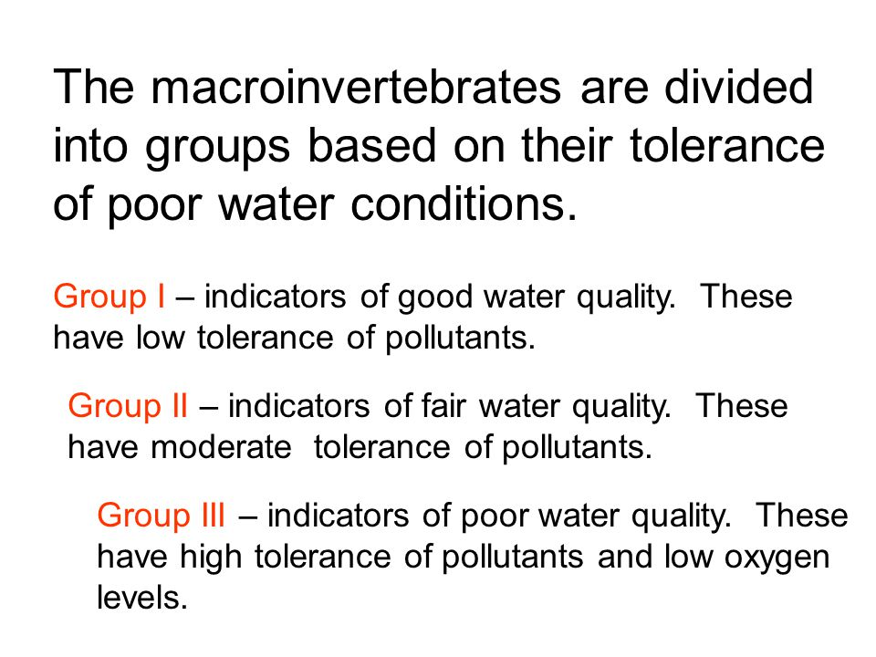 The macroinvertebrates are divided into groups based on their tolerance of poor water conditions.