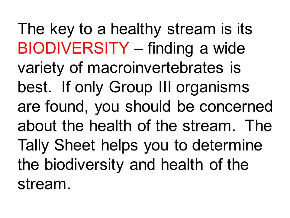 The key to a healthy stream is its BIODIVERSITY – finding a wide variety of macroinvertebrates is best.