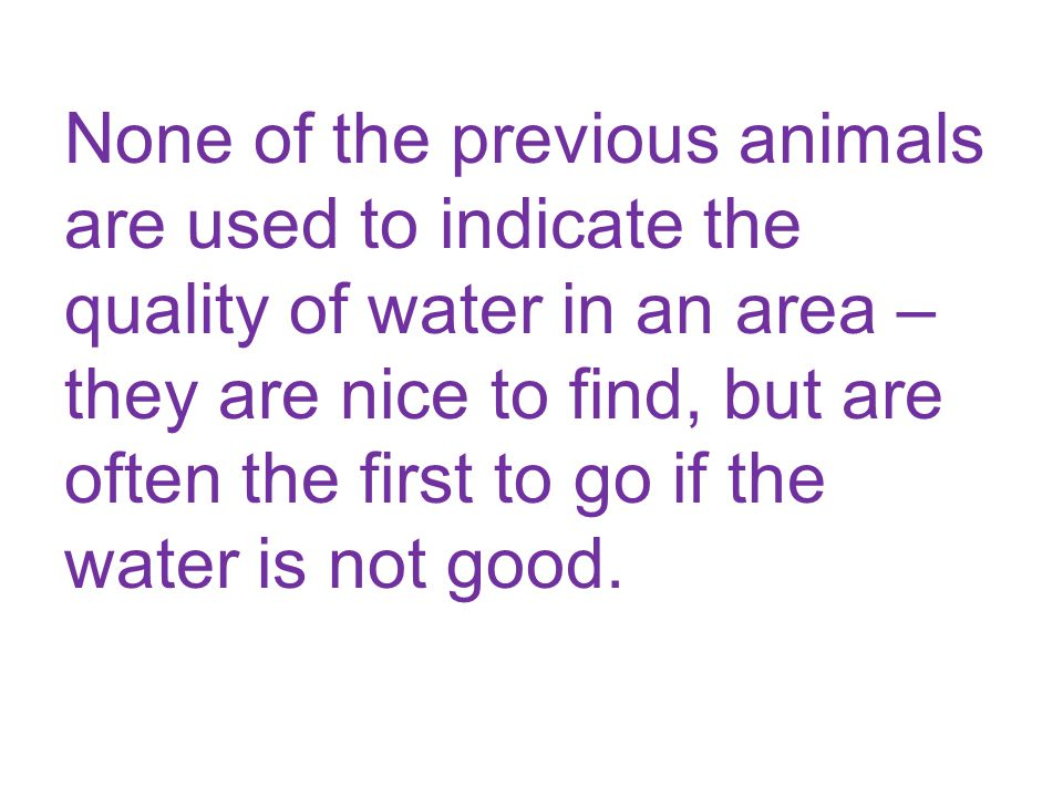 None of the previous animals are used to indicate the quality of water in an area – they are nice to find, but are often the first to go if the water is not good.