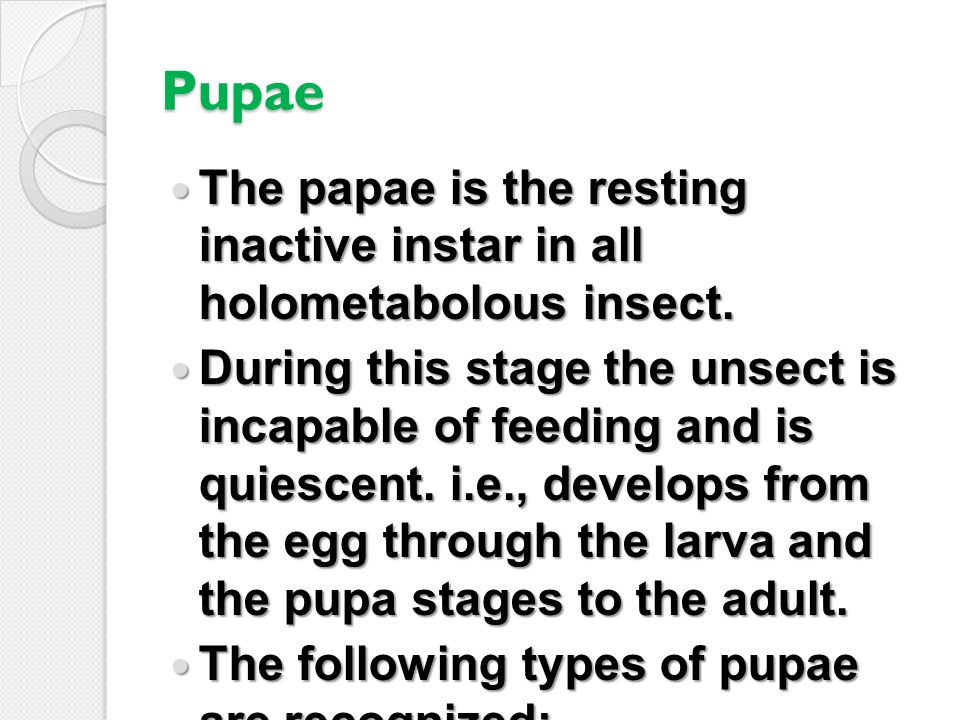 Pupae The papae is the resting inactive instar in all holometabolous insect.