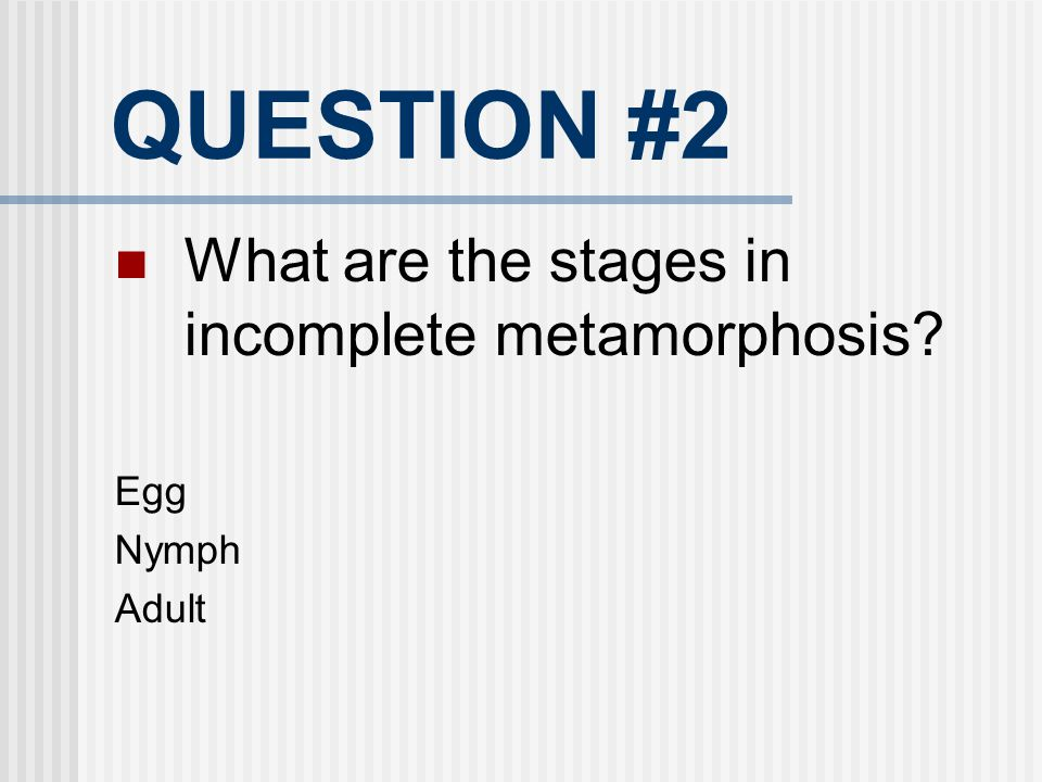 QUESTION #2 What are the stages in incomplete metamorphosis Egg Nymph