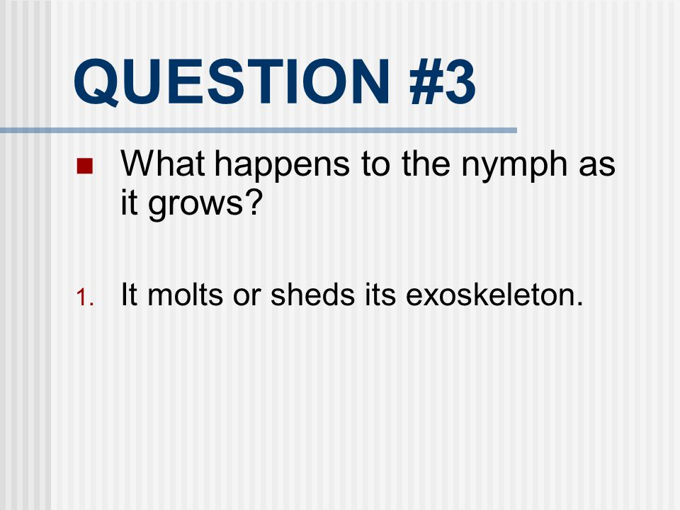 QUESTION #3 What happens to the nymph as it grows