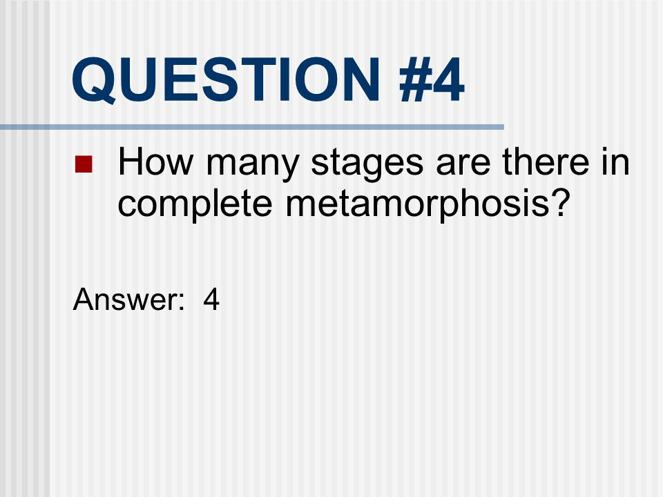 QUESTION #4 How many stages are there in complete metamorphosis
