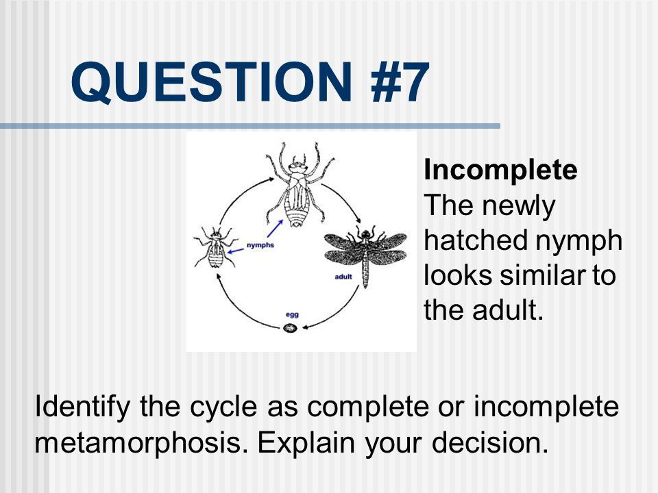 QUESTION #7 Incomplete. The newly hatched nymph looks similar to the adult.