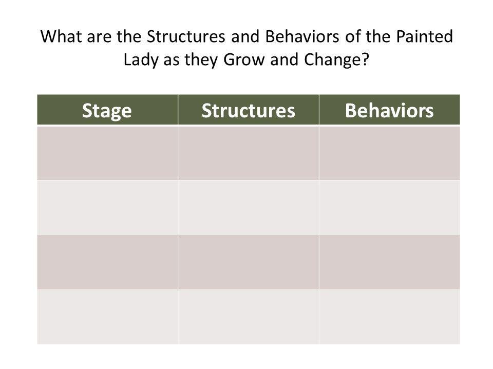Stage Structures Behaviors