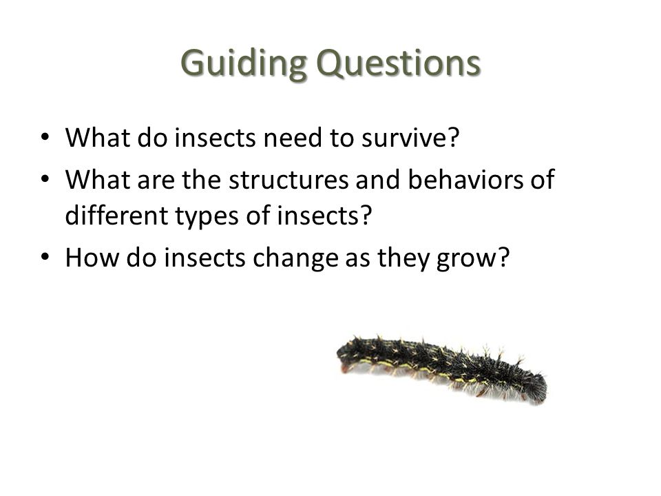 Guiding Questions What do insects need to survive