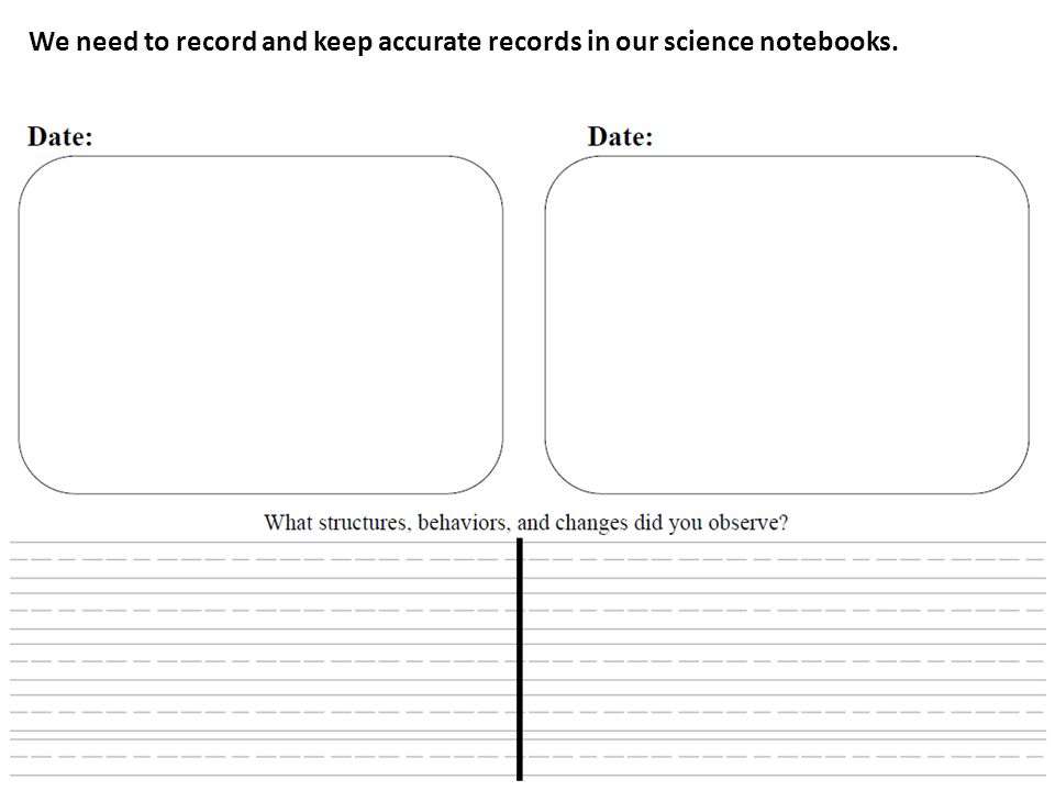 We need to record and keep accurate records in our science notebooks.