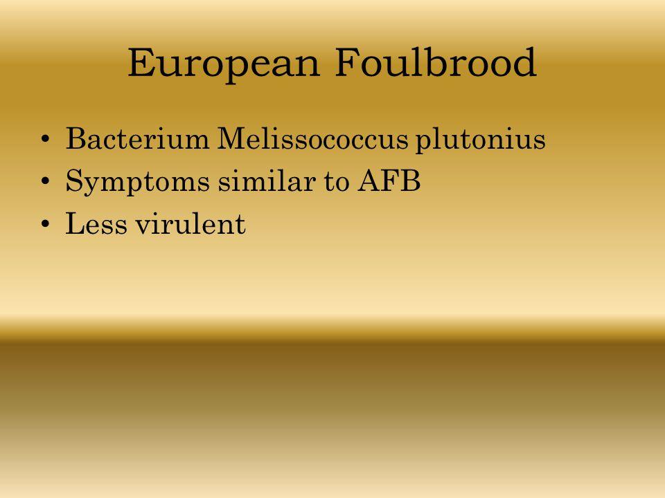 European Foulbrood Bacterium Melissococcus plutonius