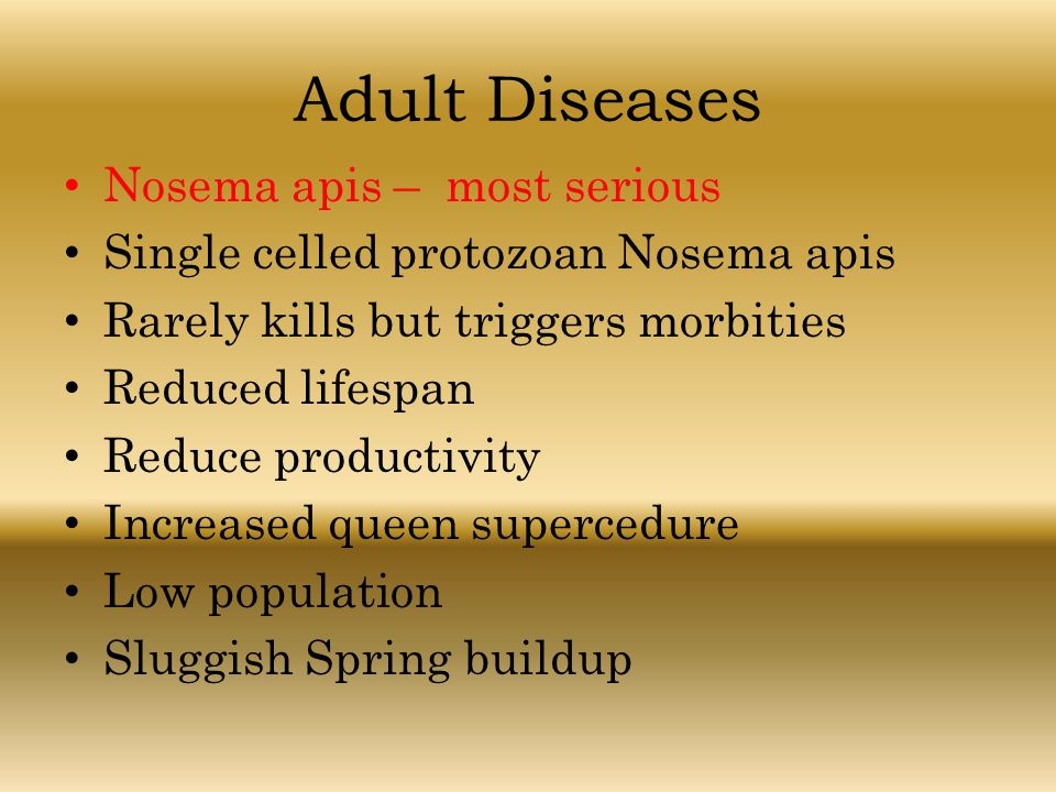Adult Diseases Nosema apis – most serious