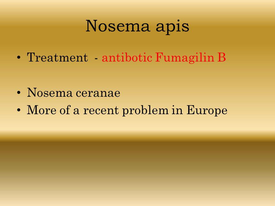 Nosema apis Treatment - antibotic Fumagilin B Nosema ceranae