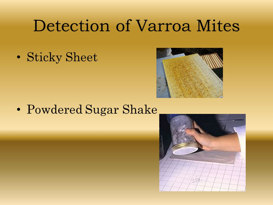 Detection of Varroa Mites