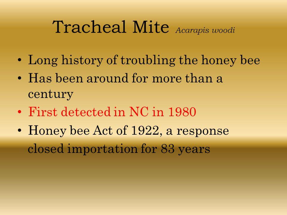 Tracheal Mite Acarapis woodi