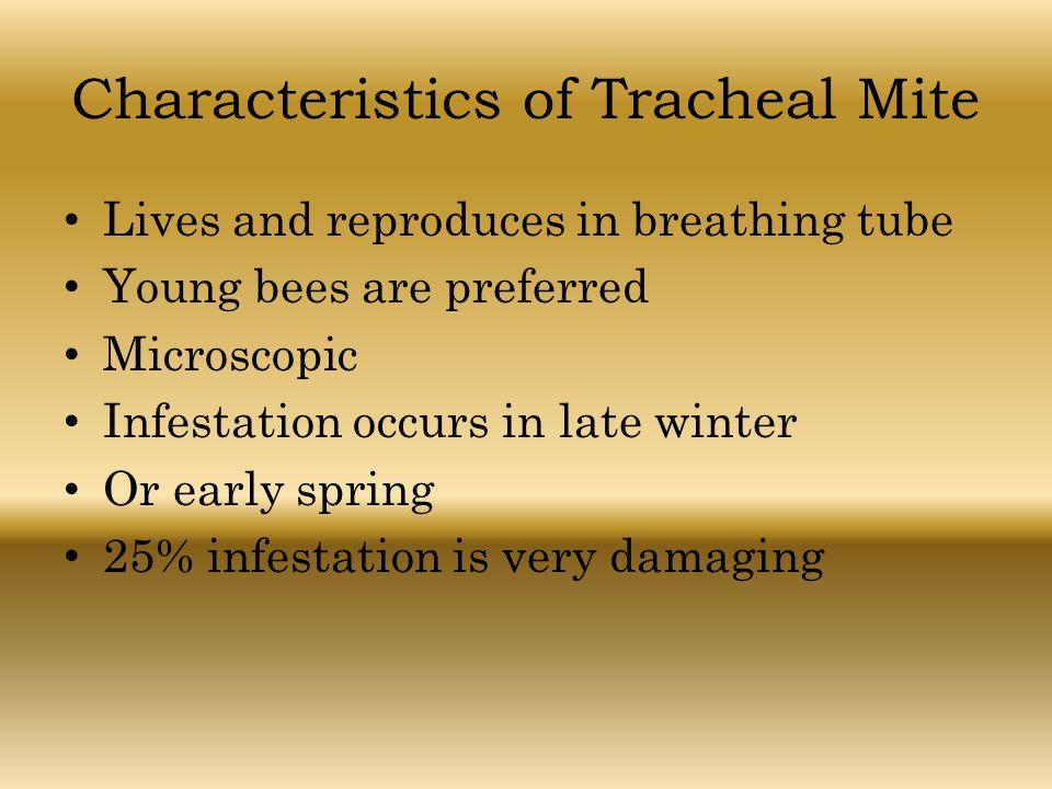 Characteristics of Tracheal Mite