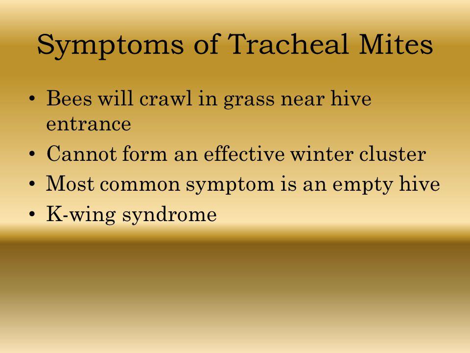 Symptoms of Tracheal Mites