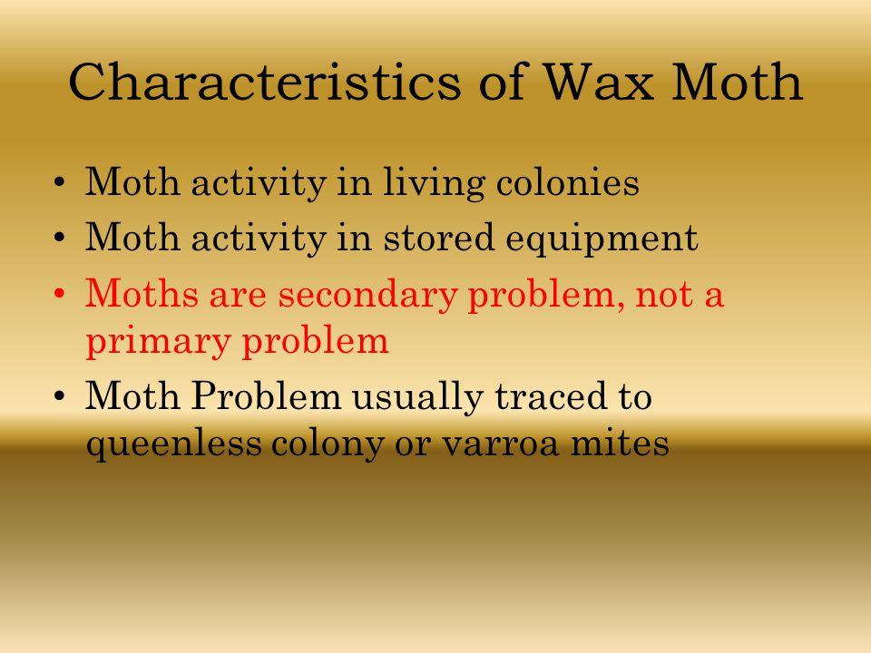 Characteristics of Wax Moth