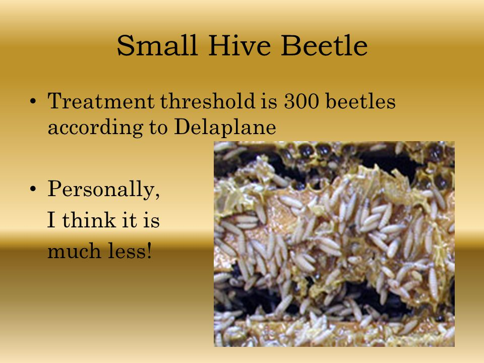 Small Hive Beetle Treatment threshold is 300 beetles according to Delaplane. Personally, I think it is.
