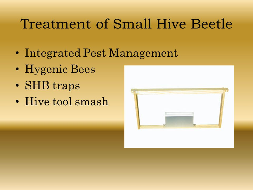 Treatment of Small Hive Beetle