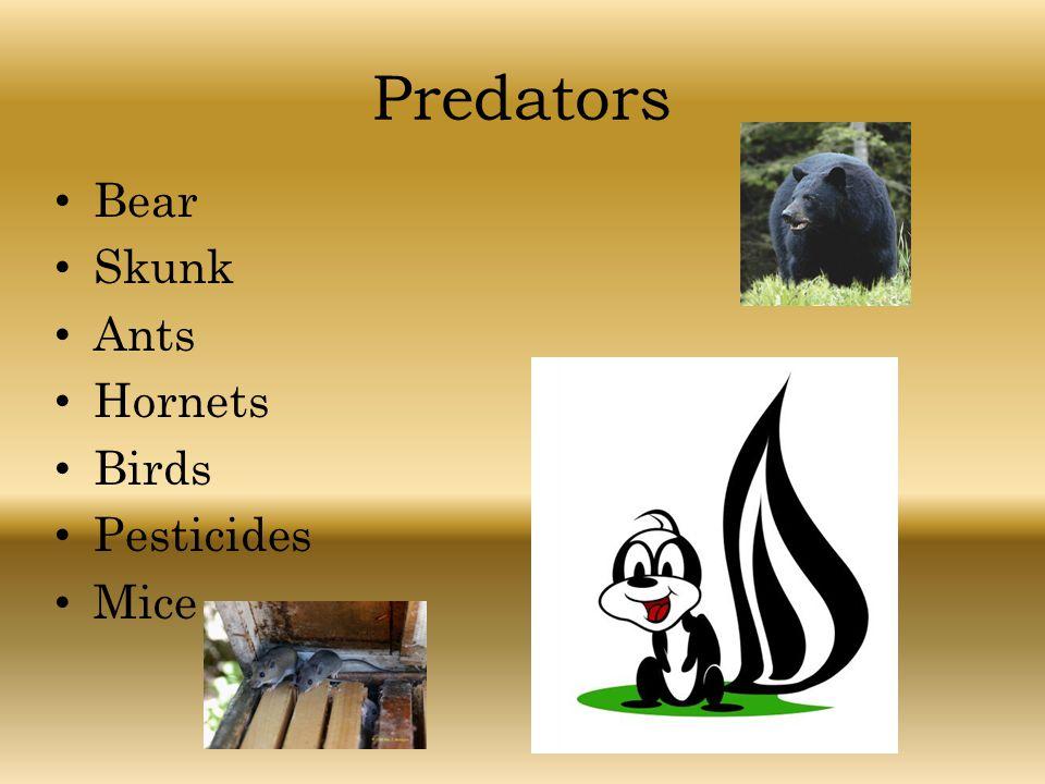 Predators Bear Skunk Ants Hornets Birds Pesticides Mice