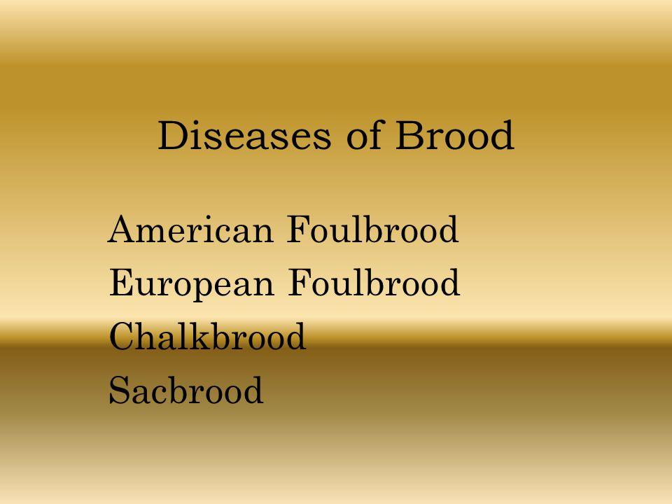 American Foulbrood European Foulbrood Chalkbrood Sacbrood