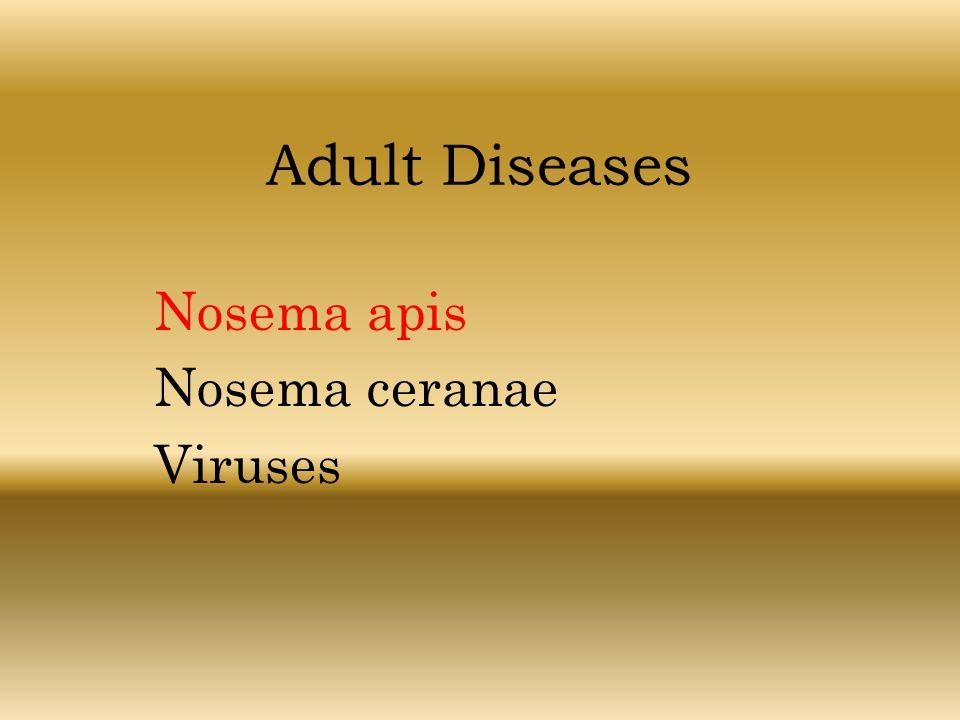 Nosema apis Nosema ceranae Viruses