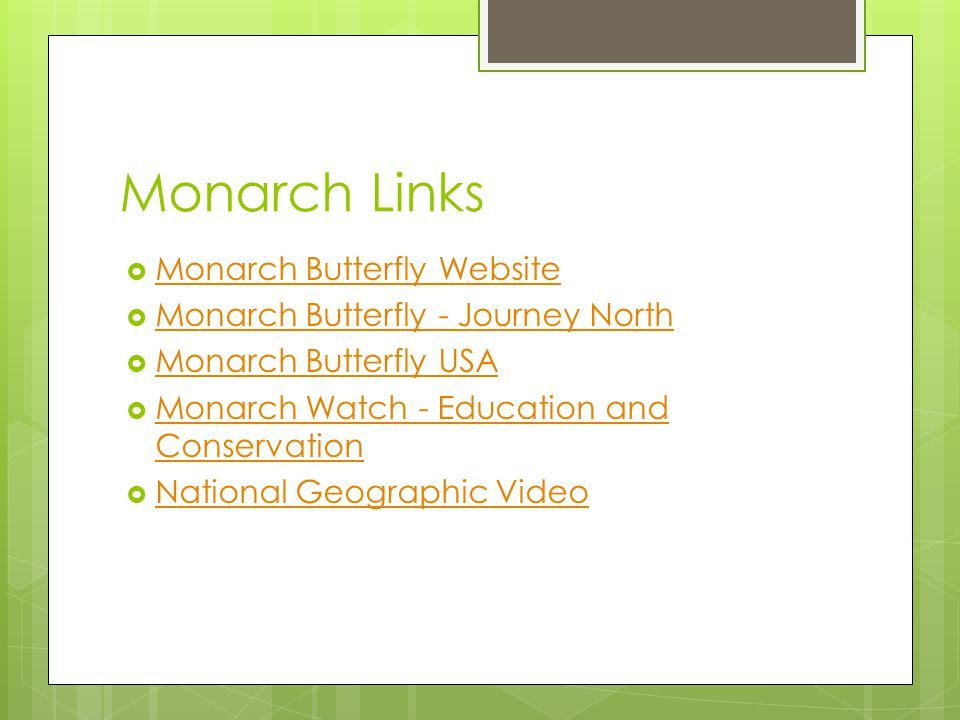 Monarch Links Monarch Butterfly Website