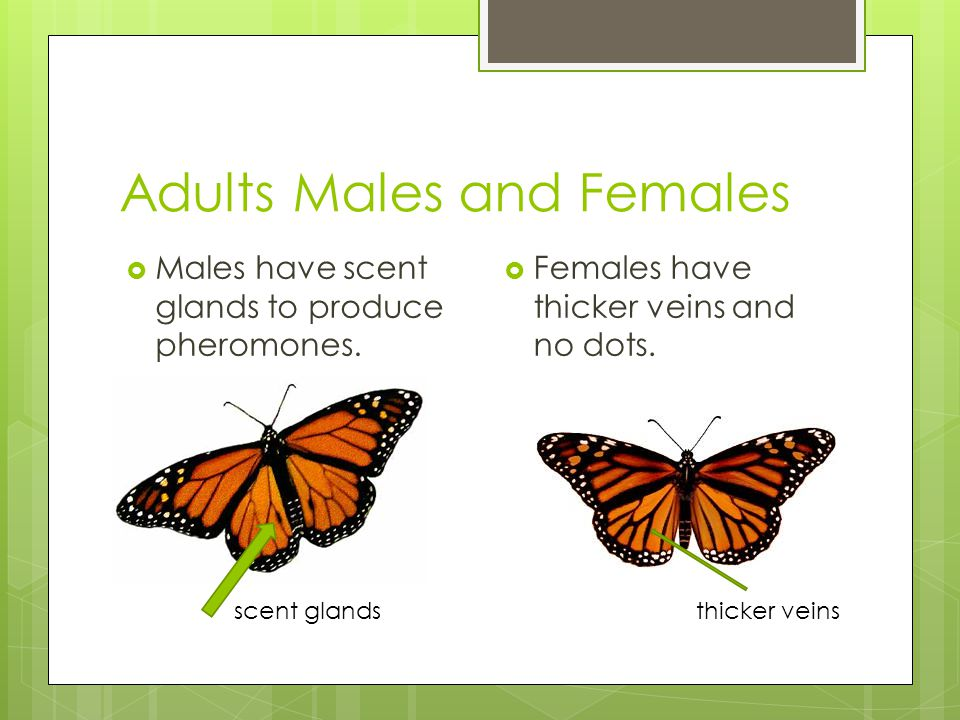 Adults Males and Females