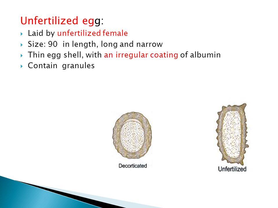 Unfertilized egg: Laid by unfertilized female
