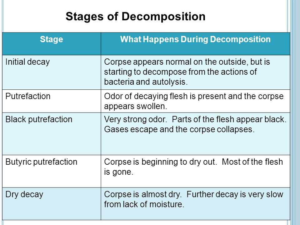 What Happens During Decomposition