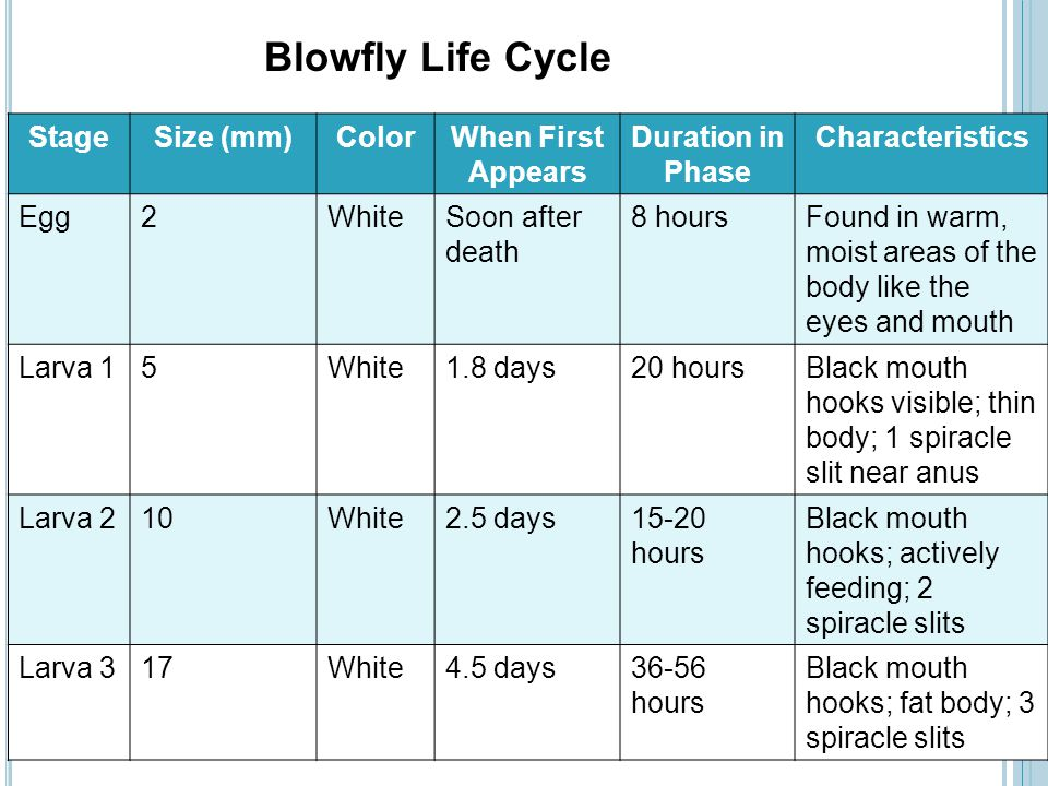 Blowfly Life Cycle Stage Size (mm) Color When First Appears