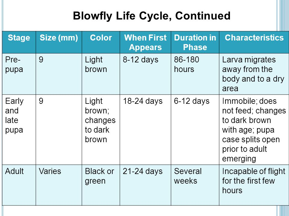 Blowfly Life Cycle, Continued
