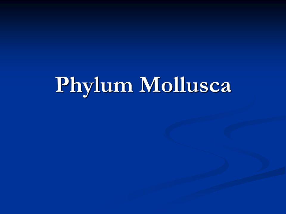 Phylum Mollusca Fig. 16.CO