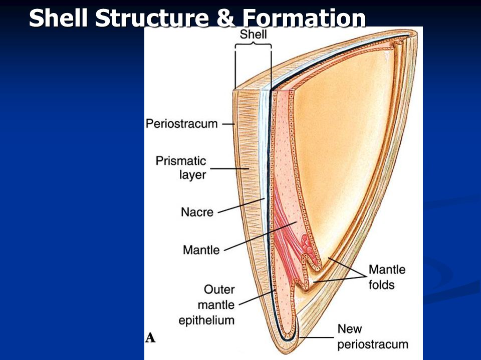 Shell Structure & Formation
