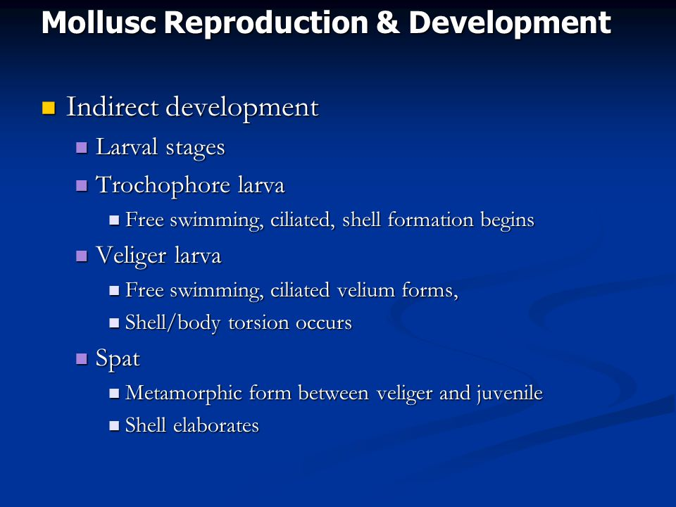 Mollusc Reproduction & Development