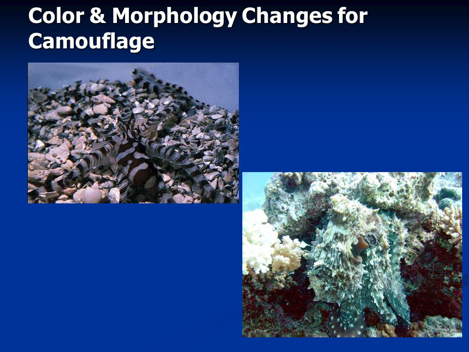 Color & Morphology Changes for Camouflage